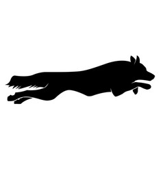 Running dogs silhouette border collie vector