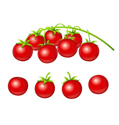 tomato cherry set of fresh vector image