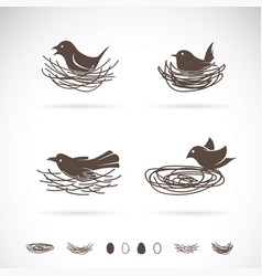 bird and nests on white background vector image