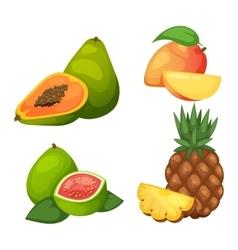 Tropical fruits set vector image vector image