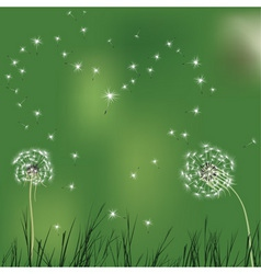 love background with realistic dandelion shaped he vector image
