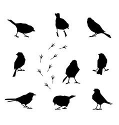 A set of silhouettes of winter birds vector