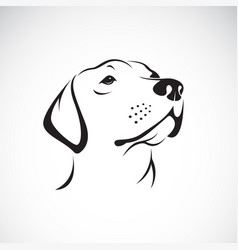 dog headlabrador retriever on white vector image