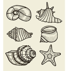 Seashells hand drawn set vector