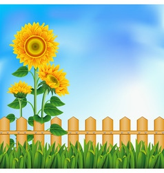 background with a field of sunflowers and blue sky vector image vector image