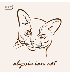 Abyssinian cat vector image