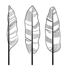 Banana leaf drawing line art template set vector