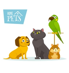 Home pets sitting in line isolated on white vector image
