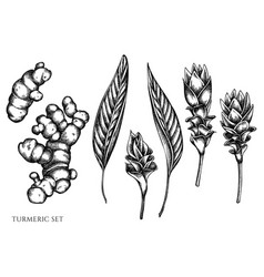set hand drawn black and white turmeric vector image