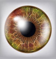 eye iiris vision medical concept vector image