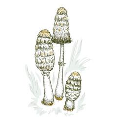 coprinus comatus fungus vector image