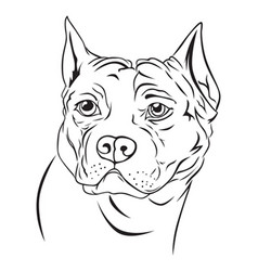 dog head vector image