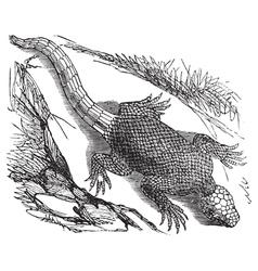 West african lizard engraving vector image vector image
