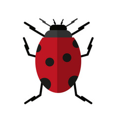 ladybug insect icon image vector image vector image