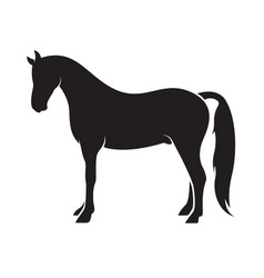 horse isolated on white background animal vector image vector image