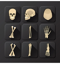 Skull And Bone Medical And Health Icon Set vector image
