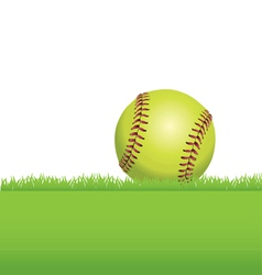 Softball in the Grass vector image