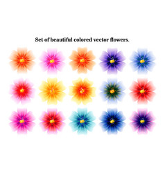 a collection flowers for design vector image