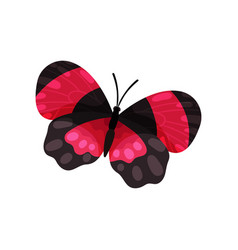 beautiful blaack and pink butterfly insect vector image