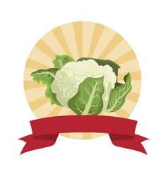 Cauliflower icon cartoon round icon vector