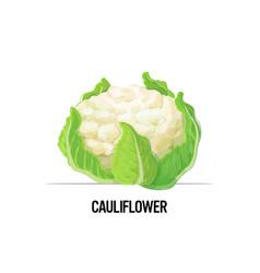 fresh cauliflower tasty vegetable icon healthy vector image