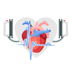 human heart modern defibrillator and piece of vector image