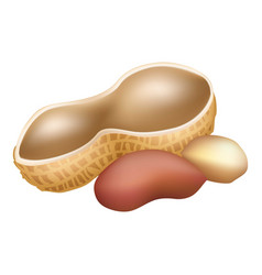 Shell peanut icon cartoon style vector