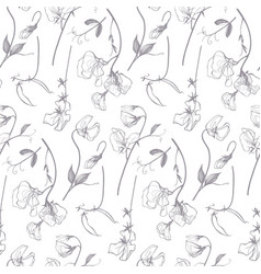 sweet pea linear floral pattern vector image