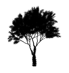 black tree silhouette isolated on white background vector image