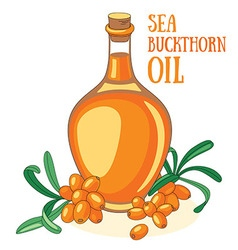 Sea buckthorn oil vector image