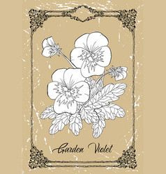 black and white drawing garden violet vector image