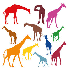 Set colorful silhouettes giraffes vector