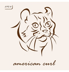 American curl vector