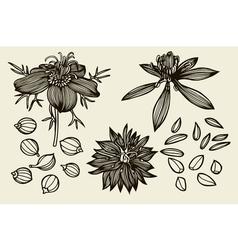 Sketch set of nigella sativa flowers and leaves vector