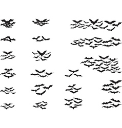 Bats flying vector image