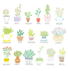 Herbs and spices set in pots with flowers vector