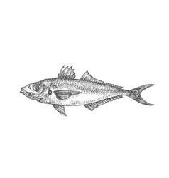 Horse mackerel hand drawn doodle vector