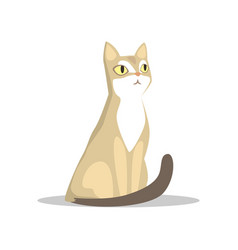 Short-haired beige cat with big yellow eyes long vector