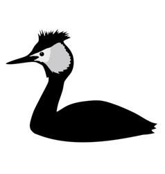 silhouette of grebe vector image vector image