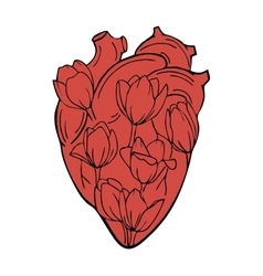 The human heart with tulips INSIDE vector
