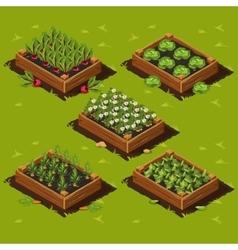 Vegetable Garden Box vector