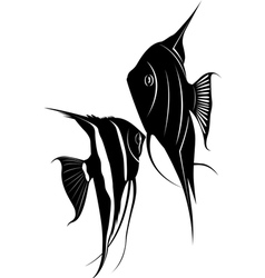 Pterophyllum vector image vector image
