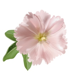 Pink mallow flower vector image vector image
