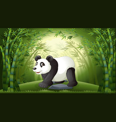 a panda in bamboo forest vector image