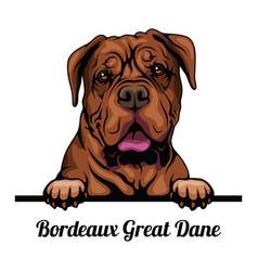 bordeaux great dane - dog breed color image vector image