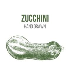 hand drawn zucchini vector image vector image