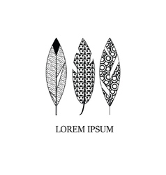 Decorative hand drawn style graphic feathers vector image vector image
