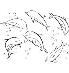 cheerful sea dolphins vector image