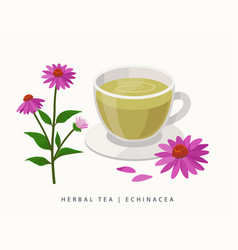 Echinacea herbal tea isolated on white background vector