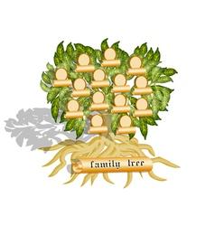 family tree on white vector image